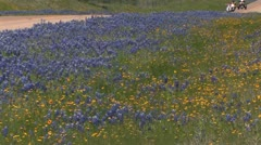 Blue bonnets on Texas road 3 Stock Footage