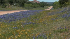 Blue bonnets on Texas road 2 - stock footage