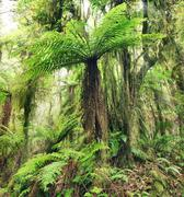 Fern tree Stock Photos