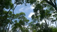 Mangrove treetops Stock Footage