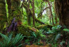 Rain forest with moss Stock Photos