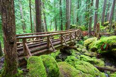 rain forest with moss - stock photo