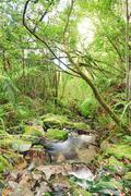 native bush - stock photo