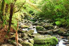 stream - stock photo