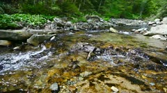 1920x1080 hidef, hdv - small forest river - stock footage