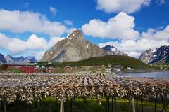 stock fish in norway - stock photo