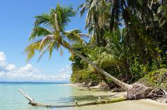 Coconut tree over the sea Stock Photos