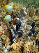 seabed with tube sponge and butterfly fish - stock photo