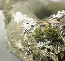 Stock Photo of natural bough with moss and lichen