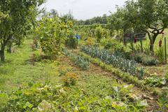 Stock Photo of allotment garden