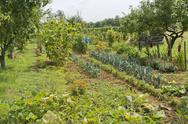 Stock Photo of allotment garden