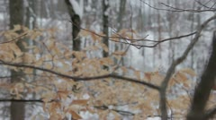 Snowy Leaf and Branches Stock Footage