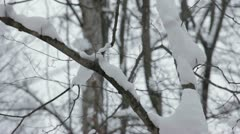 Wintery Trees Stock Footage