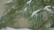 Stock Video Footage of Snow on Evergreen