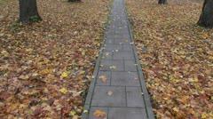 Walking in autumn  park on pavement Stock Footage