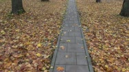Walking in autumn  park on pavement Stock Footage