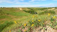 Stock Video Footage of Wildflowers in Badlands National Park