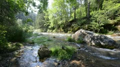 Creek in Black Hills Stock Footage