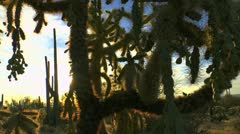 Arizona Giant Cactus Landscape Stock Footage