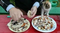 Man cut orange cap mushrooms and cat sit on knees walk Stock Footage