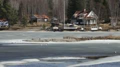 Seagulls on a tiny island in Skagshamn Stock Footage