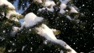 Stock Video Footage of Trees in the snow loop