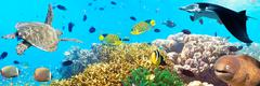 Underwater panorama Stock Photos