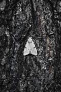 Large moth on bark of  tree Stock Photos