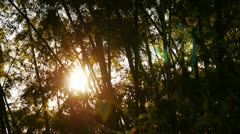 Sunset behind trees Stock Footage