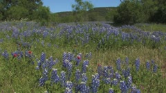 Blue bonnets to fire wheel Stock Footage