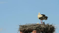 A couple of White Storks at a nest on a chimney clattering with their beaks - stock footage