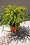 houseplant - stock photo