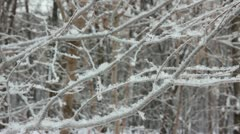 winter tree branch and snow - stock footage