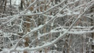 Stock Video Footage of winter tree branch and snow
