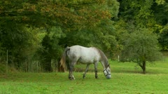 A horse in Normandy (2) Stock Footage