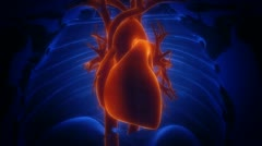 X-ray heart Stock Footage
