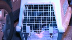 Pet  in a Carrier at a fire Stock Footage