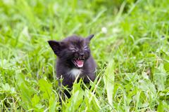 temper - small kitten in the grass - stock photo