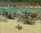 Beach in southern Cyprus with tourists 16:9 PAL Stock Footage