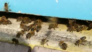 Bees flying into a beehive. Stock Footage