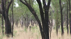 Outback south of Katharine austrailia Stock Footage