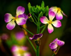 Stock Photo of Purple and yellow flowers