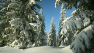 Stock Video Footage of Winter Forest landscape snow conifer light wind shallow depth of field