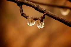 Water drops on branch - stock photo