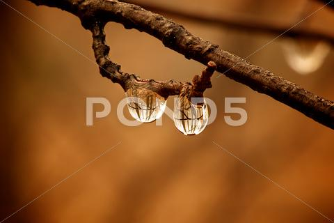 Stock photo of Water drops on branch