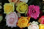Multicolored rose bouquet Stock Photos