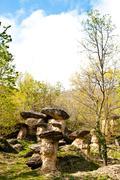 Imaginative forest landscape Stock Photos