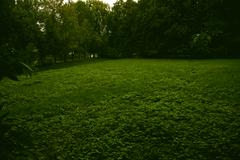 meadow with green grass in the summer forest - stock photo