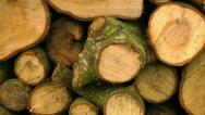 Stock Video Footage of Panning shot of a stack of logs