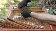 Stock Video Footage of Beekeeper is cleaning hive equipment (wooden bars) from propolis and beeswax.